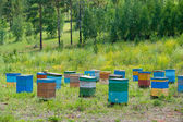 Siberian bee garden — Stock Photo