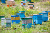 Bee garden — Stock Photo