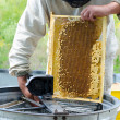 Beekeeper at work — Stock Photo #34516277