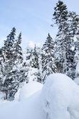 Vintern vild skog — Stockfoto