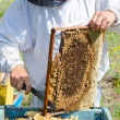 Beekeeper at work — Stock Photo #34821221
