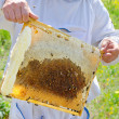 Beekeeper at work — Stock Photo #34829507