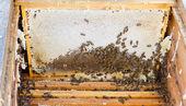 Bees in open beehive — Foto de Stock