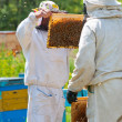 Beekeepers at work — Stock Photo