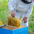 Beekeeper at work — Stock Photo #36118293