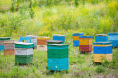Bee garden in Siberia — Stock Photo
