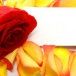 Rose and message on a petals. Background — Stock Photo #1411914