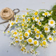 Bunch of camomile — Foto Stock #37019367