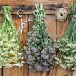 Herbs — Stock Photo #37019385