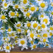 Bunch of camomile — Foto Stock #37019393