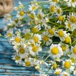 Bunch of camomile — 图库照片 #37019395