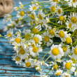 Bunch of camomile — Foto Stock #37019395