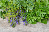 Fresh aromatic herbs — Stockfoto
