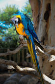 Curious big parrot on a branch — Stock Photo