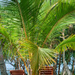 Beach chairs beetween tropica palms — Stockfoto