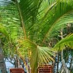 palmeras playa sillas beetween tropica — Foto de Stock