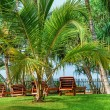 Beach beds beetween tropica palms — ストック写真