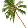 Palm isolated on white background - Stok fotoğraf