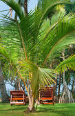 Beach chairs beetween tropica palms — Stock Photo