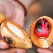 Fresh open nutmeg fruit in hands. — Stock Photo