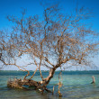 Bare tree in tropical blue sea — Stock Photo
