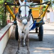 White horse and traditional tourist carriage - Stock Photo