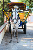White horse and traditional tourist carriage — Stock Photo