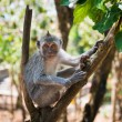 Artful monkey sitting on the tree — Stock Photo