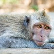 Relaxed monkey — Foto de Stock