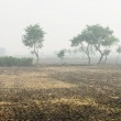Foggy cultivated plowed fields — Stock Photo