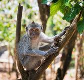 Artful monkey sitting on the tree — Stock Photo