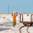 Royalty-Free Stock Photo: Salt collecting in salt farm, India