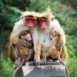 Stock Photo: Monkey family