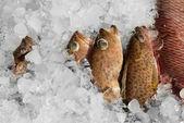 Fresh fish on ice — Stock Photo