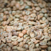 Green unroasted coffee beans — Stock Photo