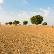 Agricultural ploughed land field in desert — Stock Photo
