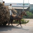 Two Indian boys ride a horse with loaded cart on a road - Stock Photo
