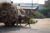 Zwei indische jungen reiten mit geladenen wagen auf einer straße — Stockfoto