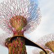 Stock Photo: Walking bridge on Super trees in Gardens by the Bay Singapore