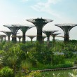 Gardens by the Bay Singapore with supertrees — Foto de Stock
