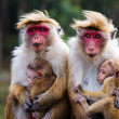 Monkey family — Stock Photo #27459897