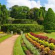 Beautiful tropical botanical garden — Stock Photo