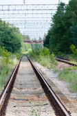 Railway tracks in green country — Stock Photo