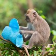 Sly monkey with stolen hat — Stock Photo