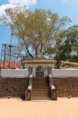 Sacred Sri Maha Bodhi tree in Anuradhapura, Sri Lanka — Stockfoto