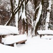 Snow winter in a park — Stock Photo