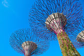 Supertrees at Gardens by the Bay, SIngapore — Stock Photo