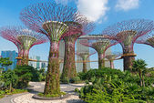 Supertrees at Gardens by the Bay park, SIngapore — Stock Photo