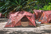 Camping with tents in tropical forest — Stock Photo