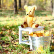 Teddy bear sitting on a chair, nearby is bucket of with leaves o - Stock Photo